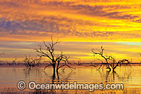 Lake Menindee River Red Gums Photo - Gary Bell