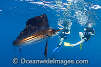 Snorkel divers and Sailfish
