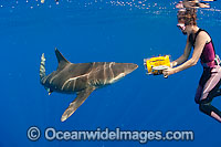 Oceanic Whitetip Shark and photographer
