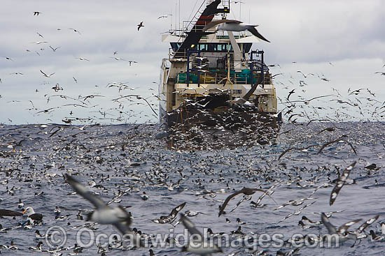 Trawler Fishing Photos, Pictures, Images
