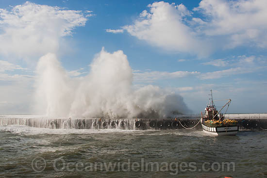Huge wave breaking against harbor wall during a storm. Kalk Bay, Cape Town, South Africa Photo - Chris and Monique Fallows