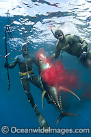 Spearfishman with Tuna Photo - Chris & Monique Fallows