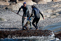 Rescuers release seal from net Photo - Chris and Monique Fallows