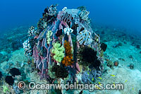 Barrel Sponge and Crinoids photo