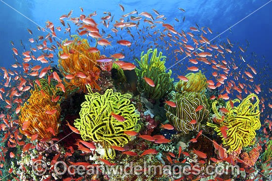 Fish coral and feather stars photo