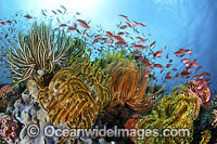 Fish coral and crinoids Photo - Gary Bell