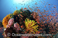 Fish coral and crinoids photo