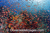 Fish and coral Photo - Gary Bell
