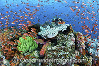 Lionfish fish coral and crinoids photo