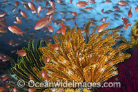 Fish coral and feather stars Photo - Gary Bell