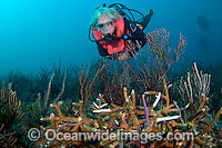 Diseased Coral Photo - Michael Patrick O'Neill