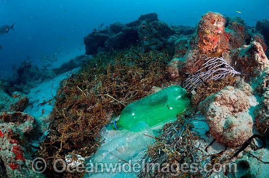 Plastic bottles litter ocean floor