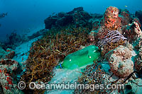 Plastic bottles litter ocean floor photo
