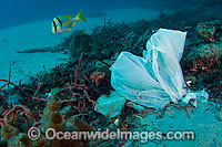 Plastic bag garbage in ocean photo