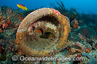 Discarded toilet on coral reef Photo - Michael Patrick O'Neill