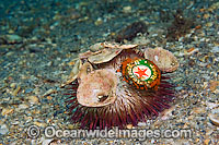 Sea Urchin with pollution Photo - Michael Patrick O'Neill