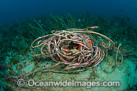Rope litters coral reef in Florida Photo - Michael Patrick O'Neill