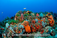 Coral Reef and fish Florida photo