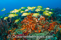 Fish and coral Florida photo