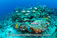 Reef Scene of fish and coral photo