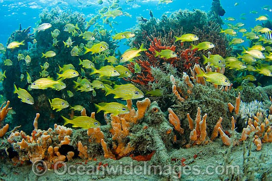 Fish among sponges and corals