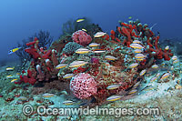 Coral Reef Florida photo