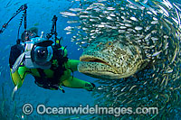 Goliath Grouper with Underwater Photographer photo