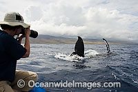 Photographer on Whale watching boat photo