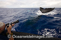 Photographer with Humpback Whale photo