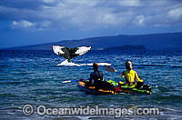 Kayakers see Humpback Whale Photo - David Fleetham