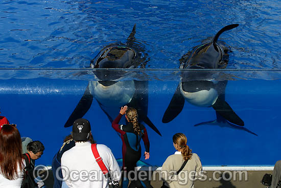 Orca Killer Whales Photos, Pictures & Images