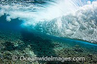 Surf crashing on reef Photo - David Fleetham