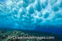 Wave crashing on reef Photo - David Fleetham