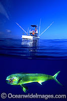 Dolphinfish and fishing boat image