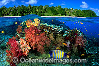 Coral reef and Island under over photo