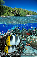 Fish Coral reef and Island photo