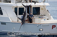 Swordfish hauled onto boat photo