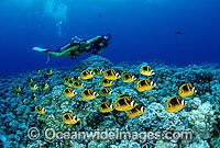 Scuba Divers with schooling fish Photo - David Fleetham