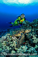 Scuba Divers with Green Sea Turtle Photo - David Fleetham