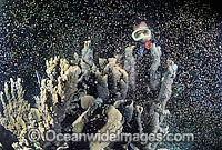 Coral spawning showing egg sperm bundles Photo - Gary Bell
