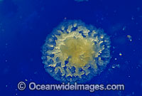 Coral reproduction. photo