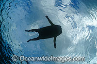 Surfer on body board silhouetted Photo - David Fleetham