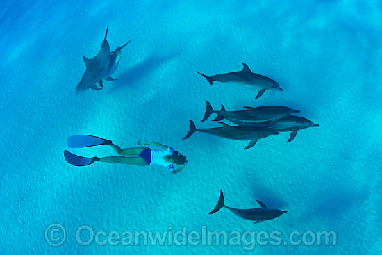 Snorkeler with Dolphins photo