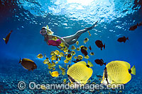 Snorkeler with Butterflyfish photo