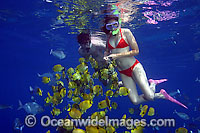 Snorkelers with Butterflyfish photo