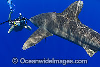 Photographer with Oceanic Whitetip Shark