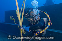 Commercial Diving Photo - David Fleetham