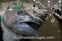 Tuna Fish at Market