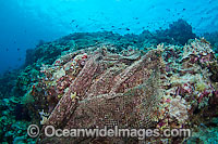 Fishing net on reef Photo - David Fleetham
