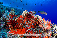 Fish Coral and Urchins Photo - David Fleetham